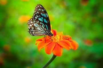 Blue butterfly fly