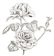 Obrazy na płótnie, fototapety, zdjęcia, fotoobrazy drukowane : Hand drawn rose