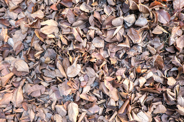Brown fallen leaves laying