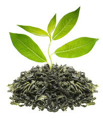 Green tea with plant isolated on white background