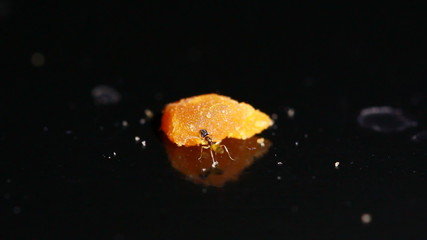 One Ant eat scrap food