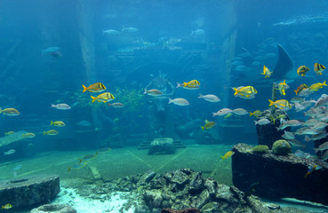 Underwater scene with a lot of colorful fish