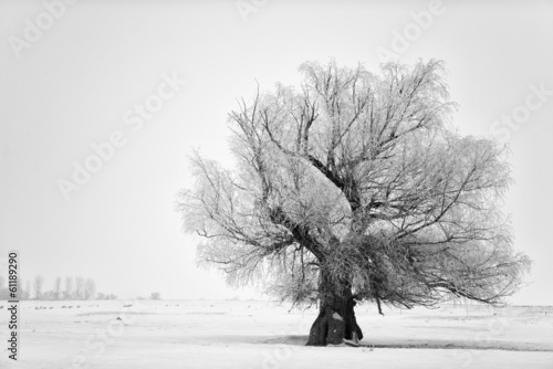 Beautiful tree in winter time in February 2014, Romania Photo by Costin79