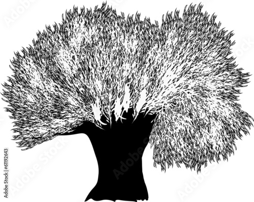 large black and white tree silhouette - 61192643