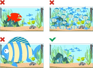 Illustrations depicting the good and bad maintenance aquarium