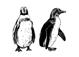 Hand drawing penguins. Vector illustration