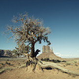 Monument Valley and tree with special photographic processing