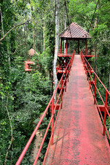 Bridge to jungle