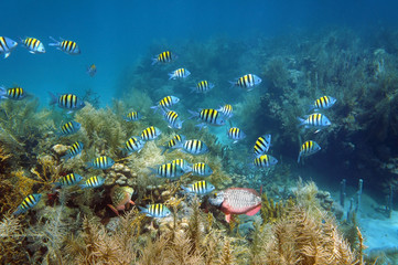 Shoal of fish in a coral reef seabed