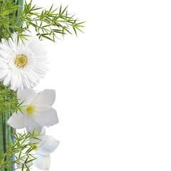 fleurs blanches sur bambou