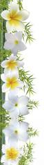 fleurs de frangipanier sur bambou