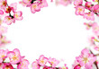 peach flowers frame - 61203221