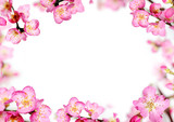 peach flowers frame
