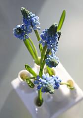 Traubenhyazinthen in der Vase