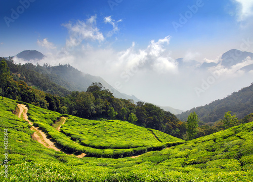 Papiers peints Inde mountain tea plantation in India
