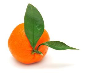 Mandarin and leaf