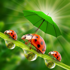 Little ladybugs with umbrella walking on the grass.