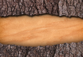 Bark and bare wood frame