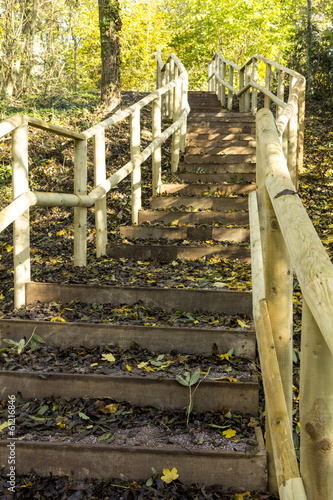 Steps in Woodland