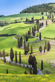 Road with curves and cypresses in Tuscany, Italy - Fine Art prints