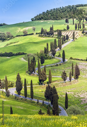 Road with curves and cypresses in Tuscany, Italy - 61217216