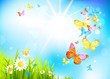 Vector summer background with flowers and butterflies