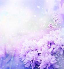 beautiful  flowers in the garden/ spring flowers