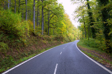 Pyrenees curve road in forest