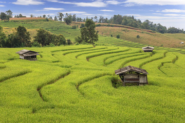 rice fields in the mountain at Chiangmai, Thailand