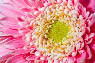 ピンクの花のクローズアップ