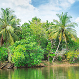 Tropical river with palm trees on  shores