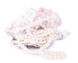 Shell with pearls, isolated on white