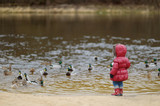 Little toddler girl feeding ducks at autumn