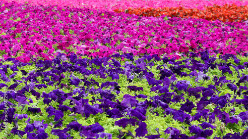 carpet of flowers