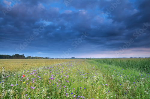 blue sky over field with wildflowers