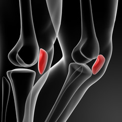 3d render illustration patella
