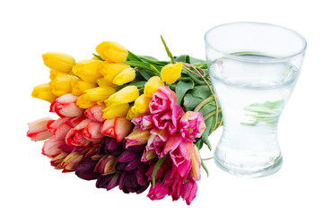bunch of fresh tulips and glass  vase