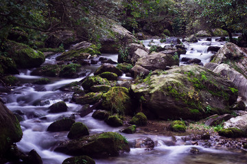 Creamy River