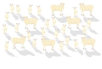 ヒツジの群れと白い背景