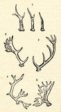 Horns - roe deer1, hind2, red deer3, reindeer4, elk5