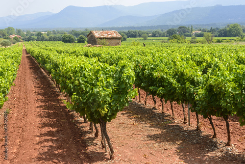 Vineyards in Var (Provence)