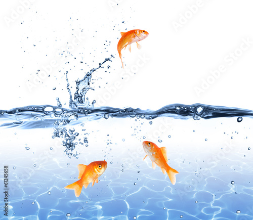 Fototapeta goldfish jumping out of the water - escape concept