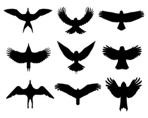Black silhouettes of  birds in flight, vector isolated