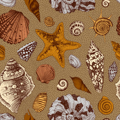 Vector seamless vintage pattern with colorful seashells