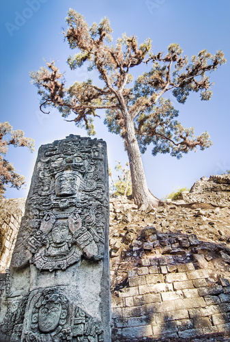 Maya Statue Under an old Tree at Copan, Honduras