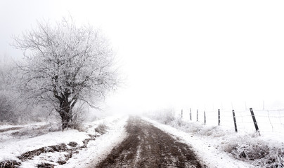 Frosty winter | rural scene