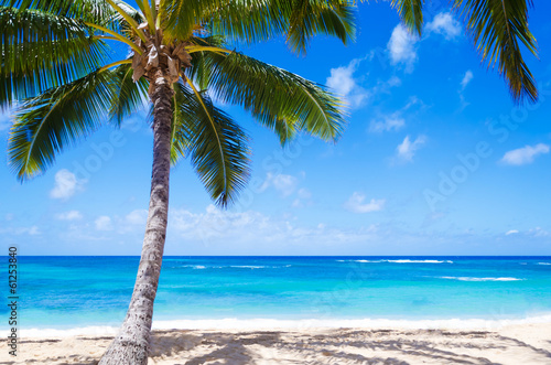 Staande foto Palm boom Coconut Palm tree on the sandy beach in Hawaii