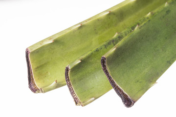 Aloe vera cuttings