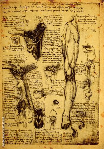 Leinwandbild Motiv Anatomy