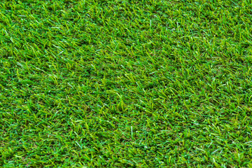 Close up of golf green grass
